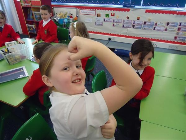 Science-Muscles work in pairs!