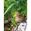 Our duck watches over the newts and frogs.