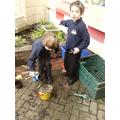 Gardening in Egrets