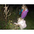 Planting a new hedgerow