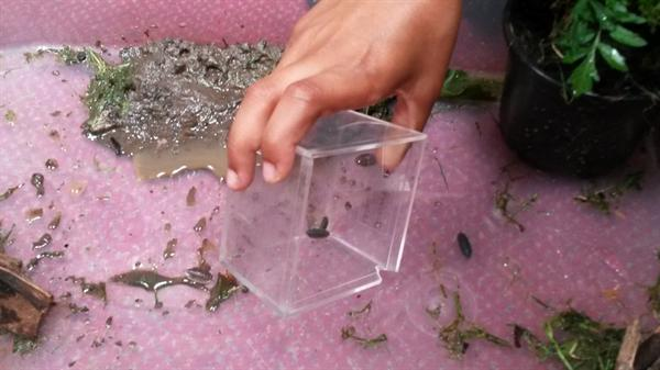 Which habitat will the woodlice prefer?