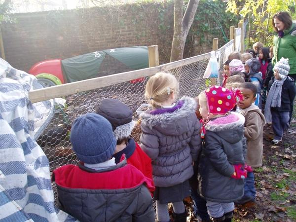 Visiting the school's chickens