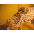 Welcome to the chicks