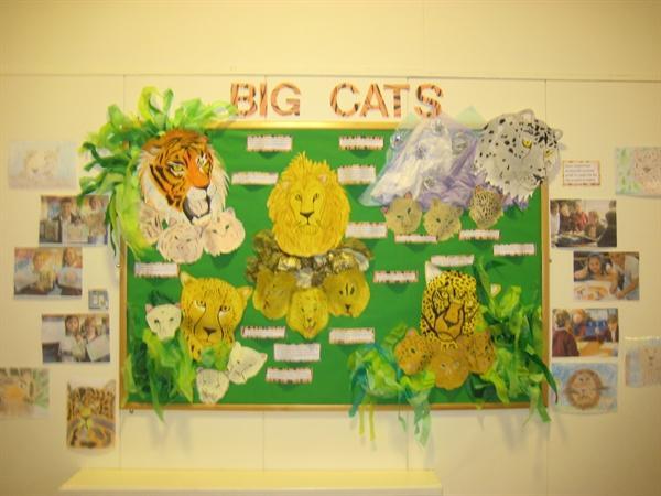Big Cats Display - Year 3 and 4