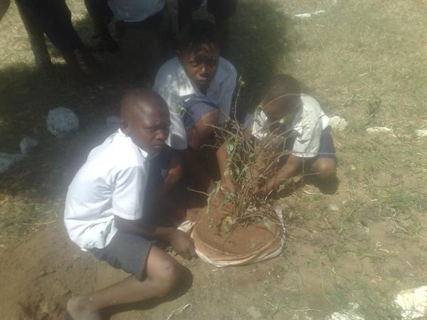 Gardening Club at Martinshamba December 2012