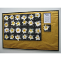Daisyfield Daisies by Class 1