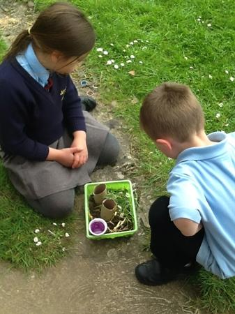 We put our habitat in our garden!