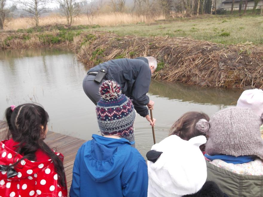 Pond dipping!