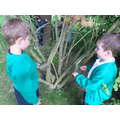 Investigating tree branches
