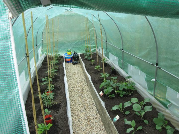 Here we see the various fruits and vegetables – cabbage, tomatoes, cucumber strawberries and sweet peppers.