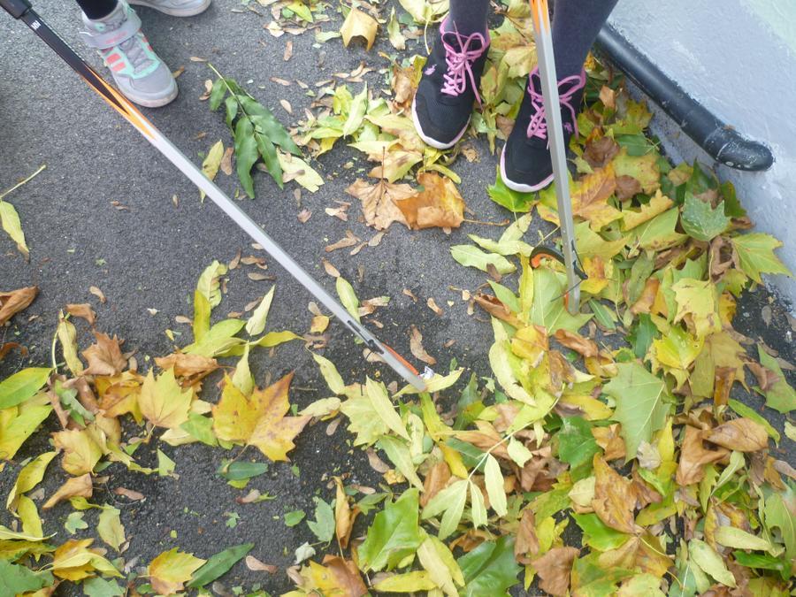 That looks like leaves not litter!