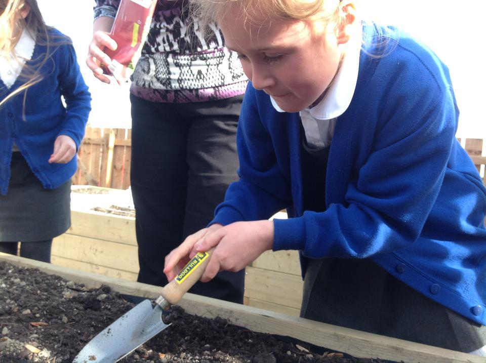 Planting more peas