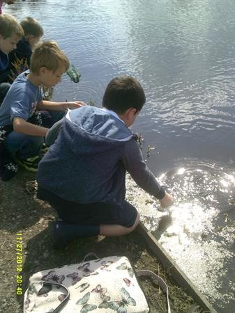 Year 3 Doxey Marshes Trip