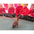 We loved the meerkats