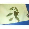 Leaf Art man