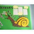 Year 1: Snail Facts