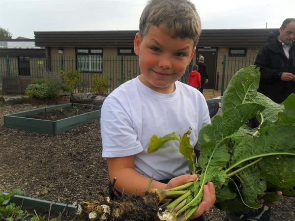 Working in our allotment and tasting our good work