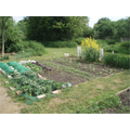 The vegetable plots