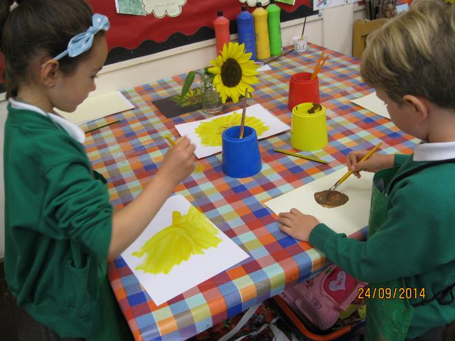 Maple Class have been looking at sunflowers.