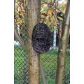 Birds nests.