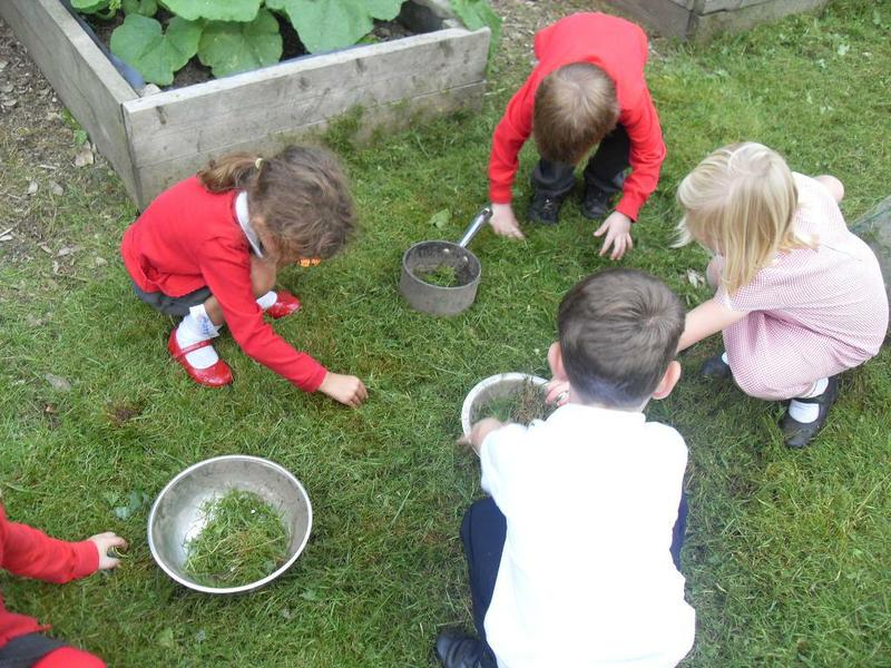 Collecting ingredients for our mud kitchen
