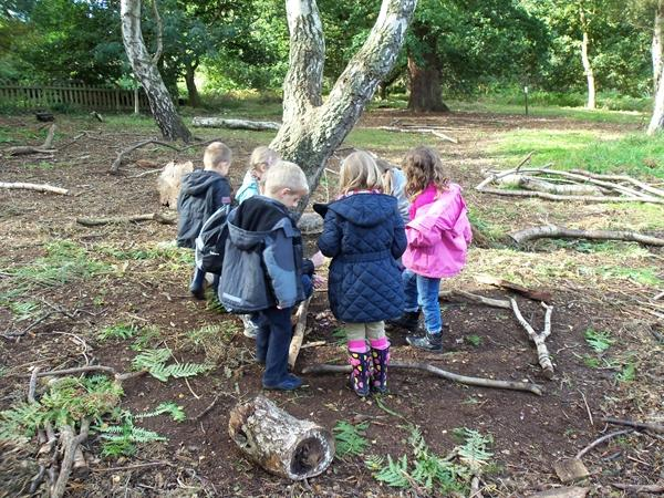 Collecting materials for wild wood art