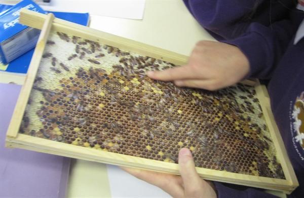 Elterwater Beekeeping (Sept 2012)