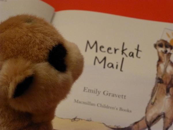 Sunny reading Meerkat Mail