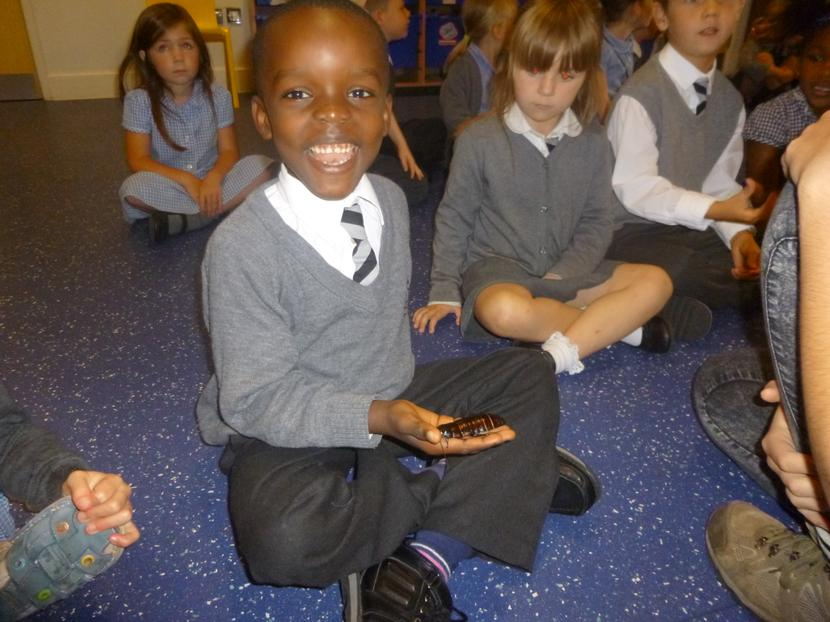 First we learnt about the giant cockroach.