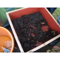 Lots new compost from our worms