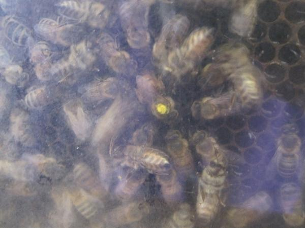 Bees (Sept 2012)