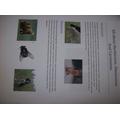 William's Animal Diet Homework