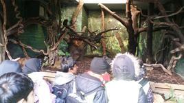 London Zoo 3