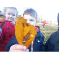 Finding different coloured leaves
