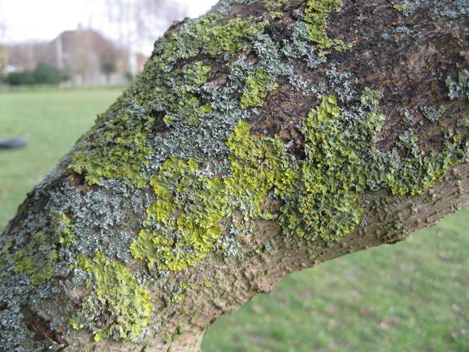 Lichen, moss and fungi were in lots of places.