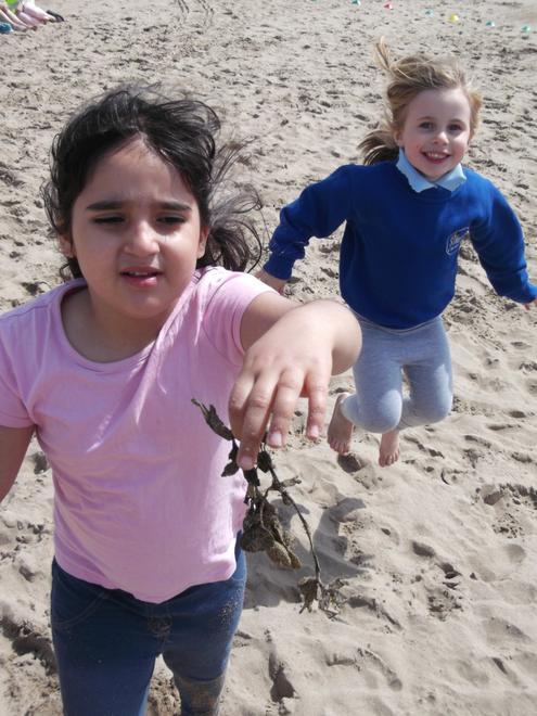We found bladderwrack- a type of seaweed!