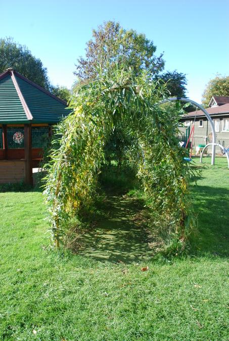 Willow arch to outdoors classroom