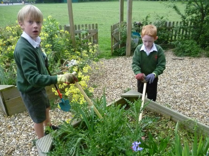William and Archie attacking the weeds