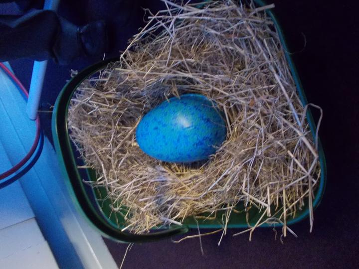 The blue egg!