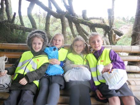 October 2013 - Twycross Zoo - Healthy Eating & Teeth - Year 3 4