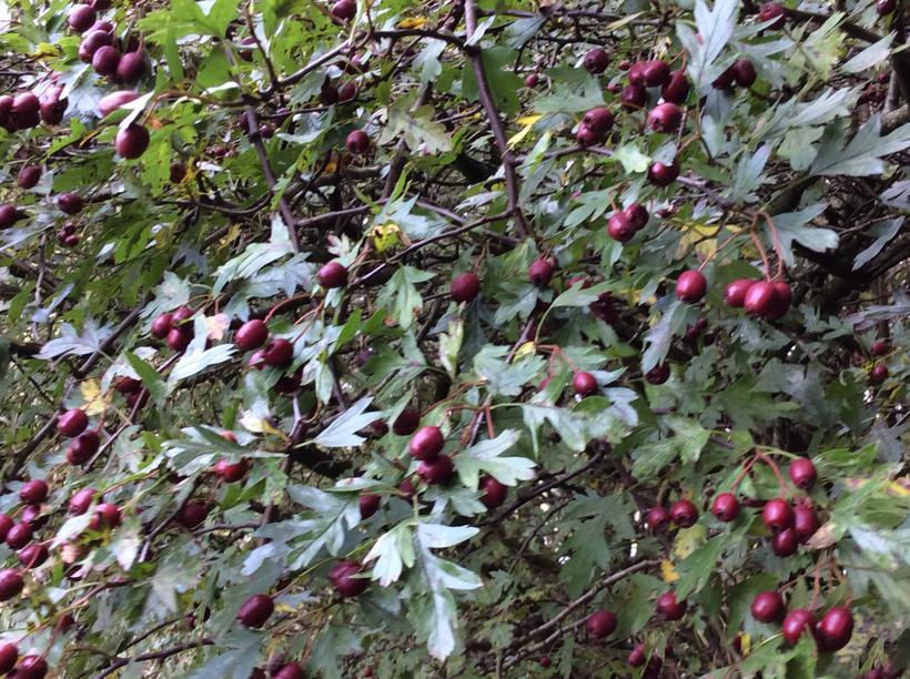 We saw beautiful berries