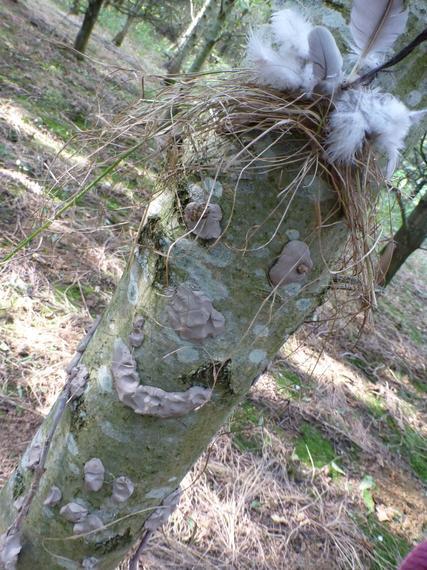 Kelly the tree face!