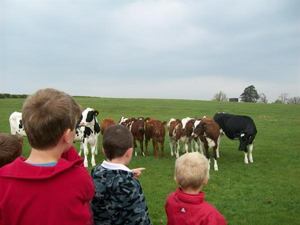 We walked the fields and met the dairy herd