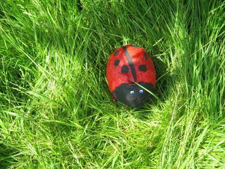 Minibeasts and their habitats Year 4
