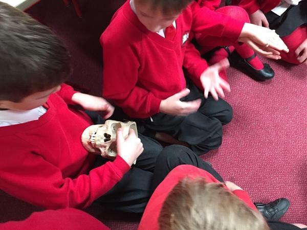 Exploring Mrs D'sa's Skull!