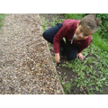 Keeping our path tidy - well done
