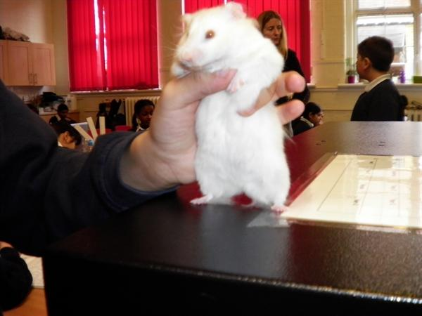 Crystal - Our class hamster!
