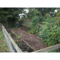 Our own allotment