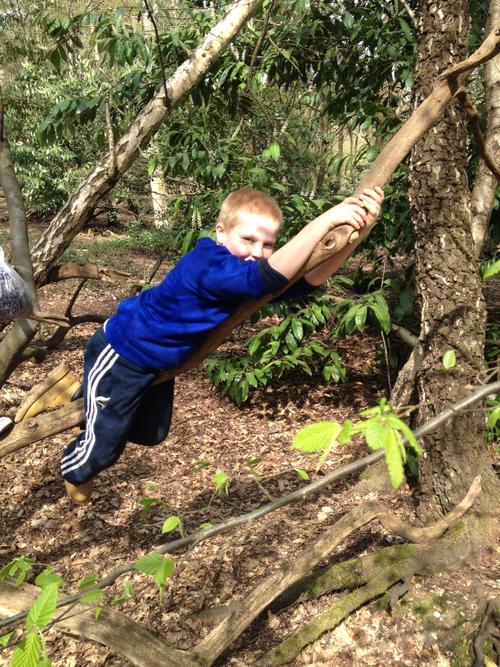 Harry climbing the trees...