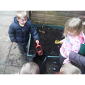 Planting our potatoes.